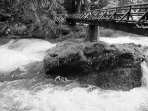 overlanders - rapids on fraser