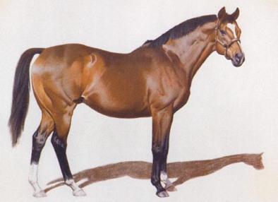 northern dancer - image